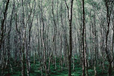 krank-201406-『 森を望む 』 木下由貴写真展