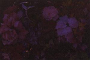 """野村佐紀子 写真展 """" flowerless """" DM-thumb"""