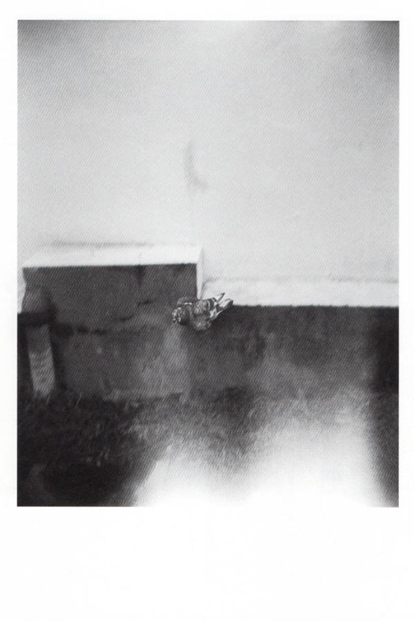baku-201702-津田仁 写真展「あくがれ」