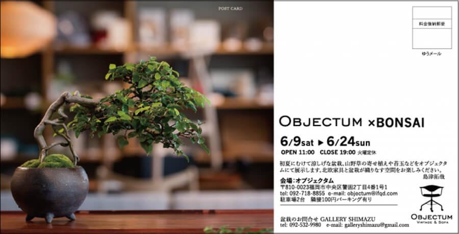 shimazu-201806-盆栽展2