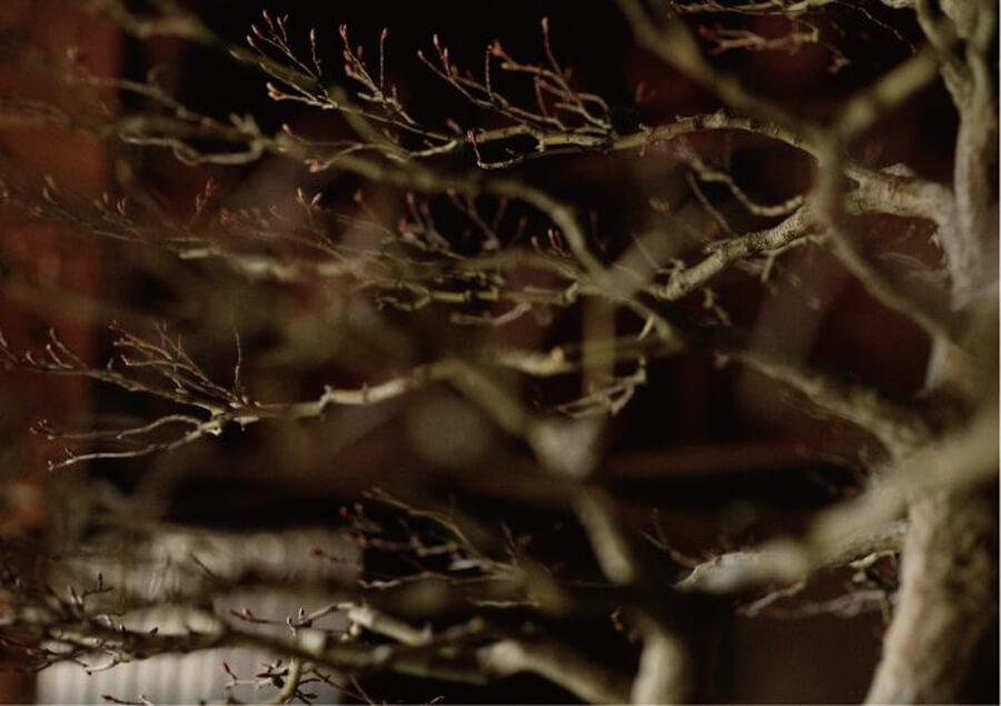 shimazu-201901-寒樹-展覧会2