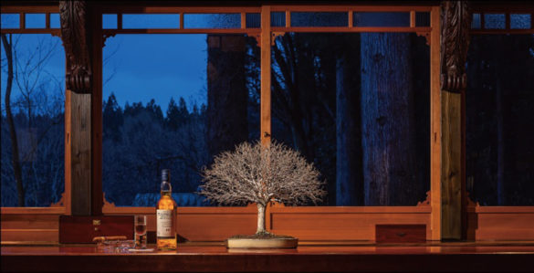 shimazu-202002-盆栽旅 Bar Barolo冬編01