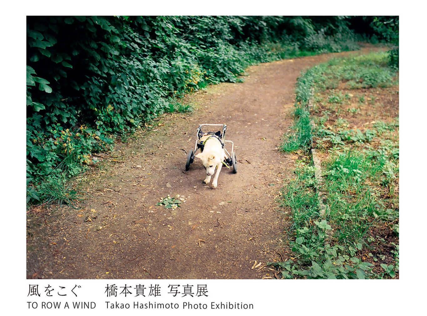reizenso-202007-橋本貴雄 写真展