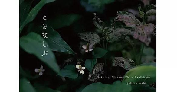 wabi-202007-櫻木雅美 写真展